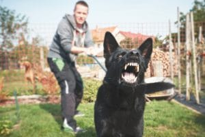 What Is My Dog Bite Case Worth? - Tips from Brian Pushchak Law Firm